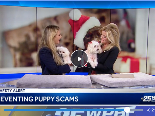 Polin PR placement for American Humane on WPBF.com