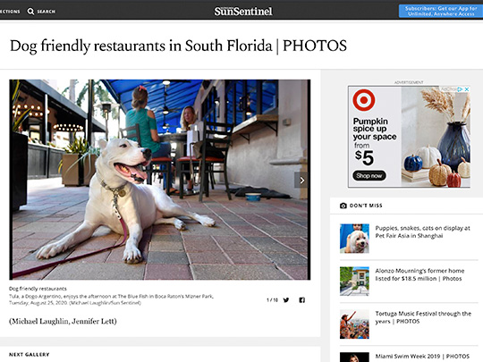 Dog friendly restaurants in South Florida